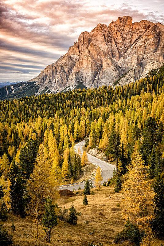 路,森林,秋天,背景,杉树,横越,暗色,草,日落,上装