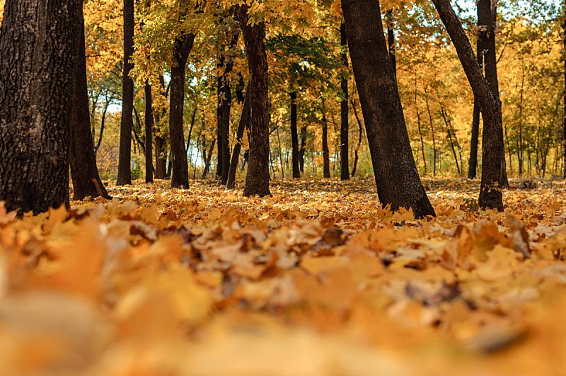 十月,秋天,叶子,路,日光,地形,森林,公园,树,落下