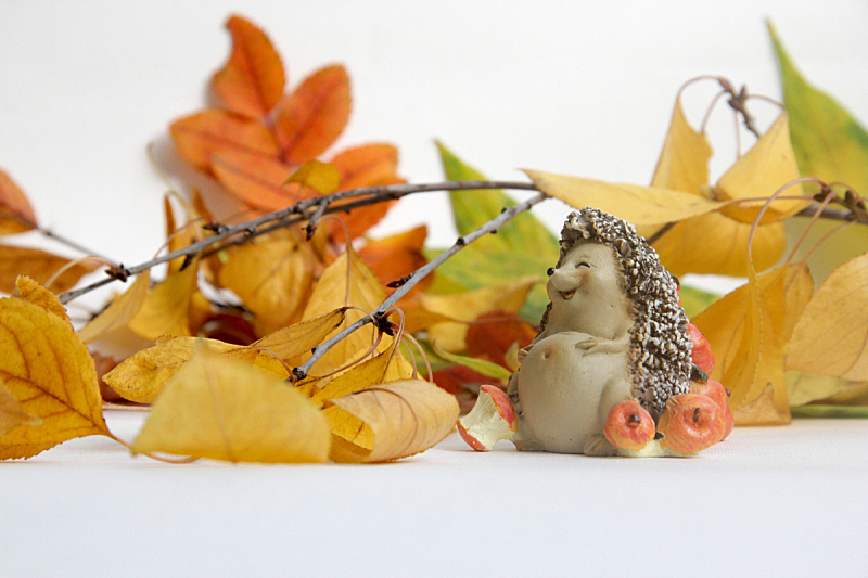 刺猬,叶子,秋天,小雕像,可爱的,浪漫,肖像,狗,加拿大,哺乳纲