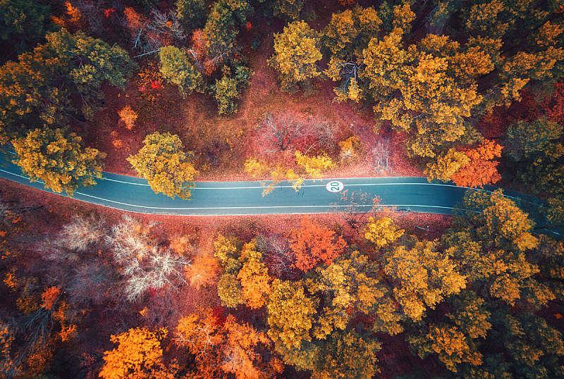 公路,红色,秋天,风景,叶子,多色的,路,橙色,在上面,地形