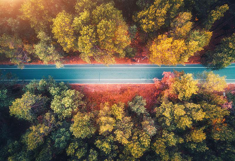 公路,色彩鲜艳,黄色,红色,秋天,风景,叶子,树林,路,空的