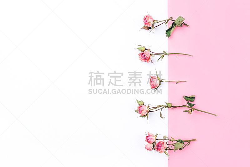 边框,白色,干的,玫瑰,粉色背景,请柬,贺卡,浪漫,复古风格,模板
