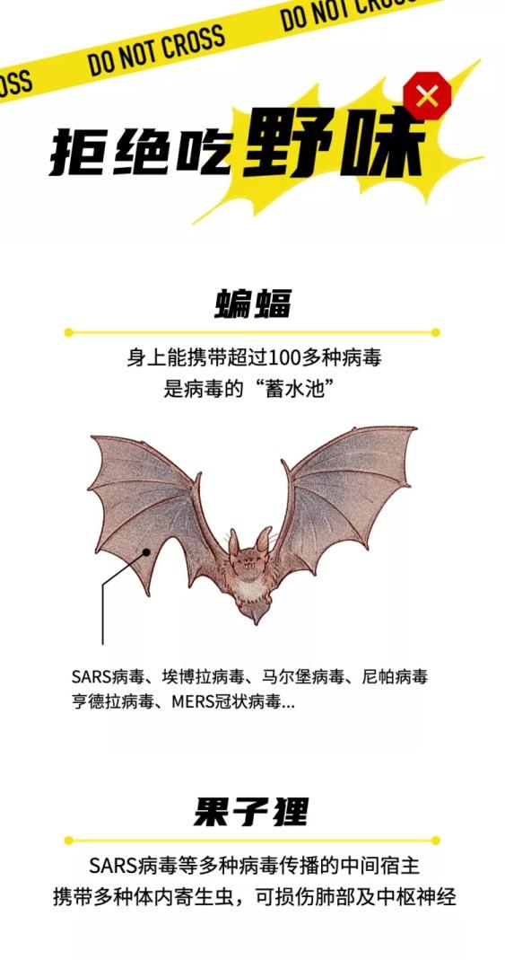 肺炎疫情拒吃野味野生动物科普文章长图